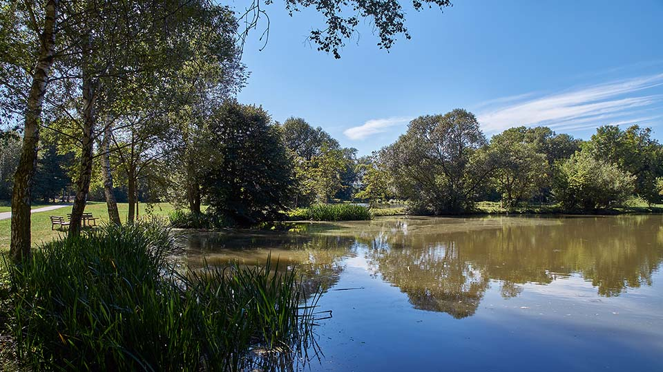 Photo Image Picture